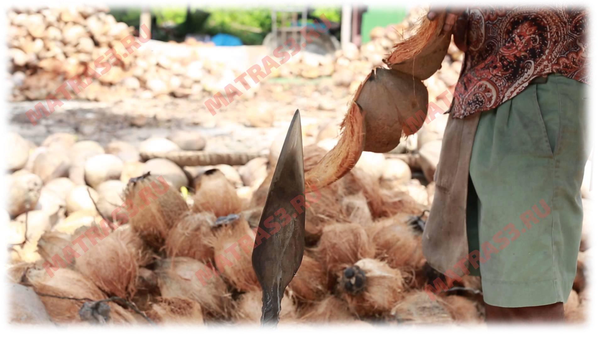 Как производят кокосовую койру для матрасов?