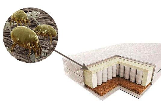 Пылевые клещи являются причиной аллергий и астмы. Будьте внимательны к чистоте спального места.