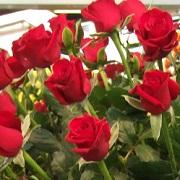 Роза, его запах, влиния на сон