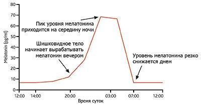 График суточной секреции мелатонина.